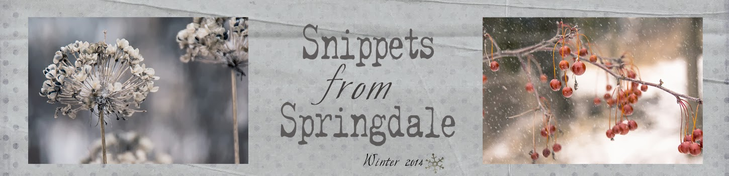 Snippets from Springdale