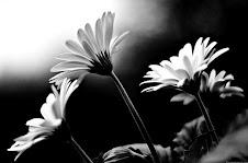 Un Amore lontano è a volte più vicino di qualcuno a portata di mano...