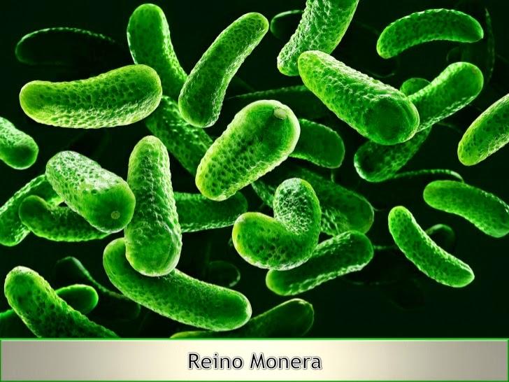 Autotrofos fotosinteticos y quimiosinteticos 59