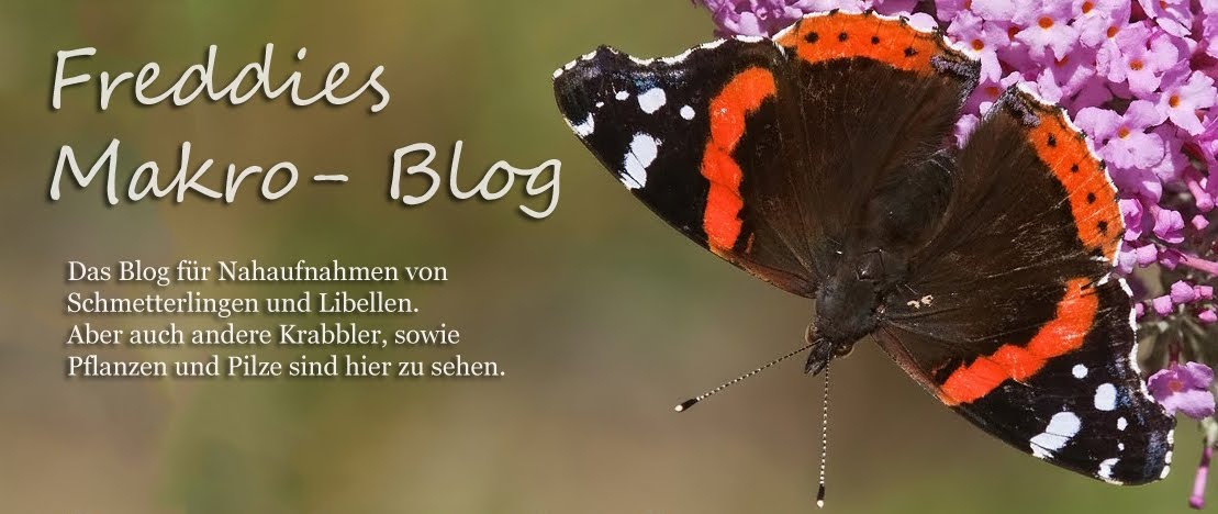 Freddies Makro-Blog