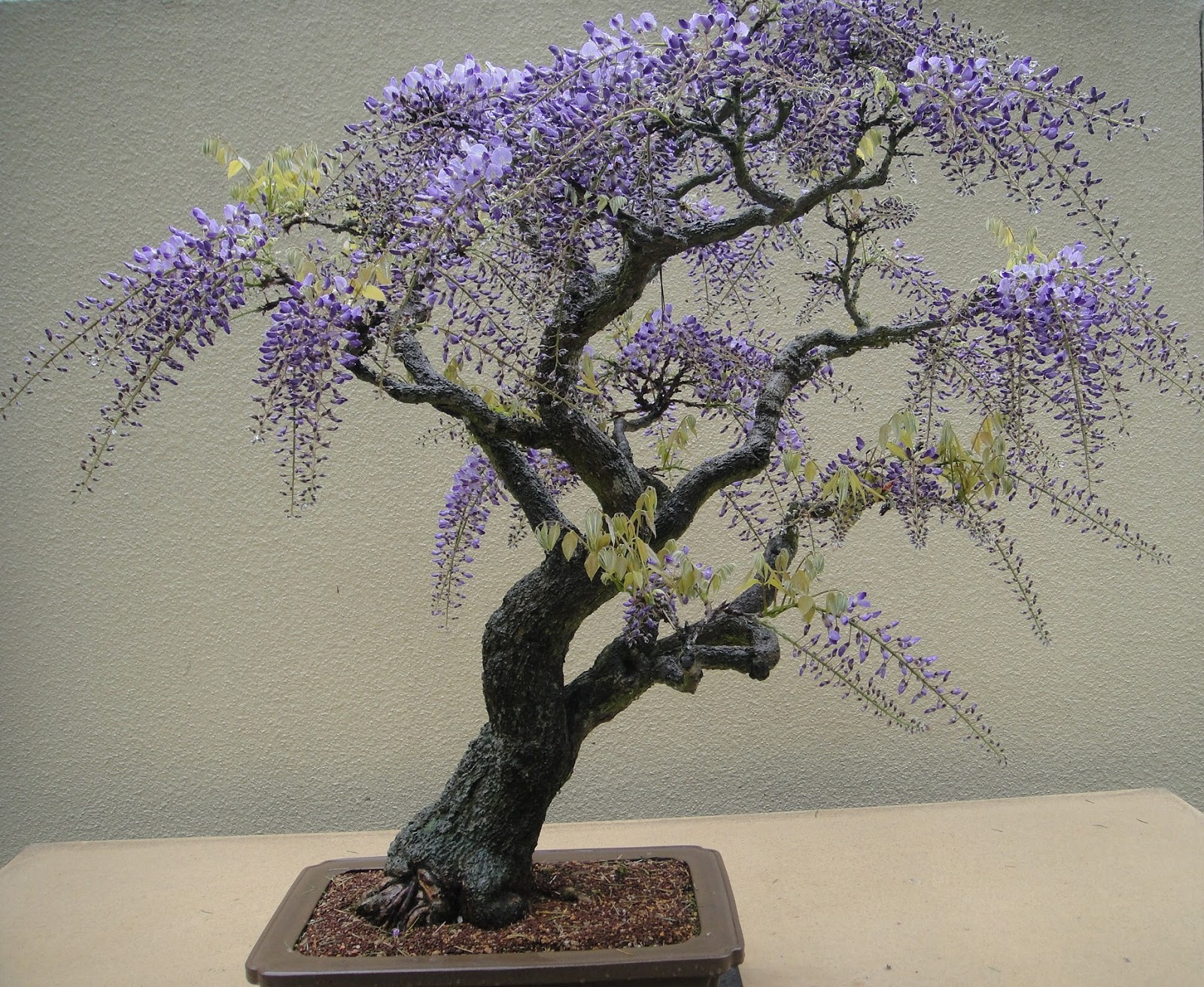 how to make the best fertilizer for bonsai