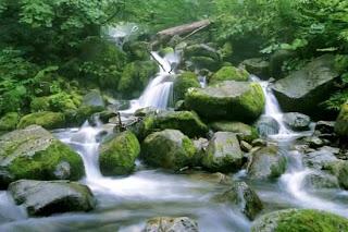 Shirakami-Sanchi Tohoku, Japan (Best Honeymoon Destinations In Asia) 5