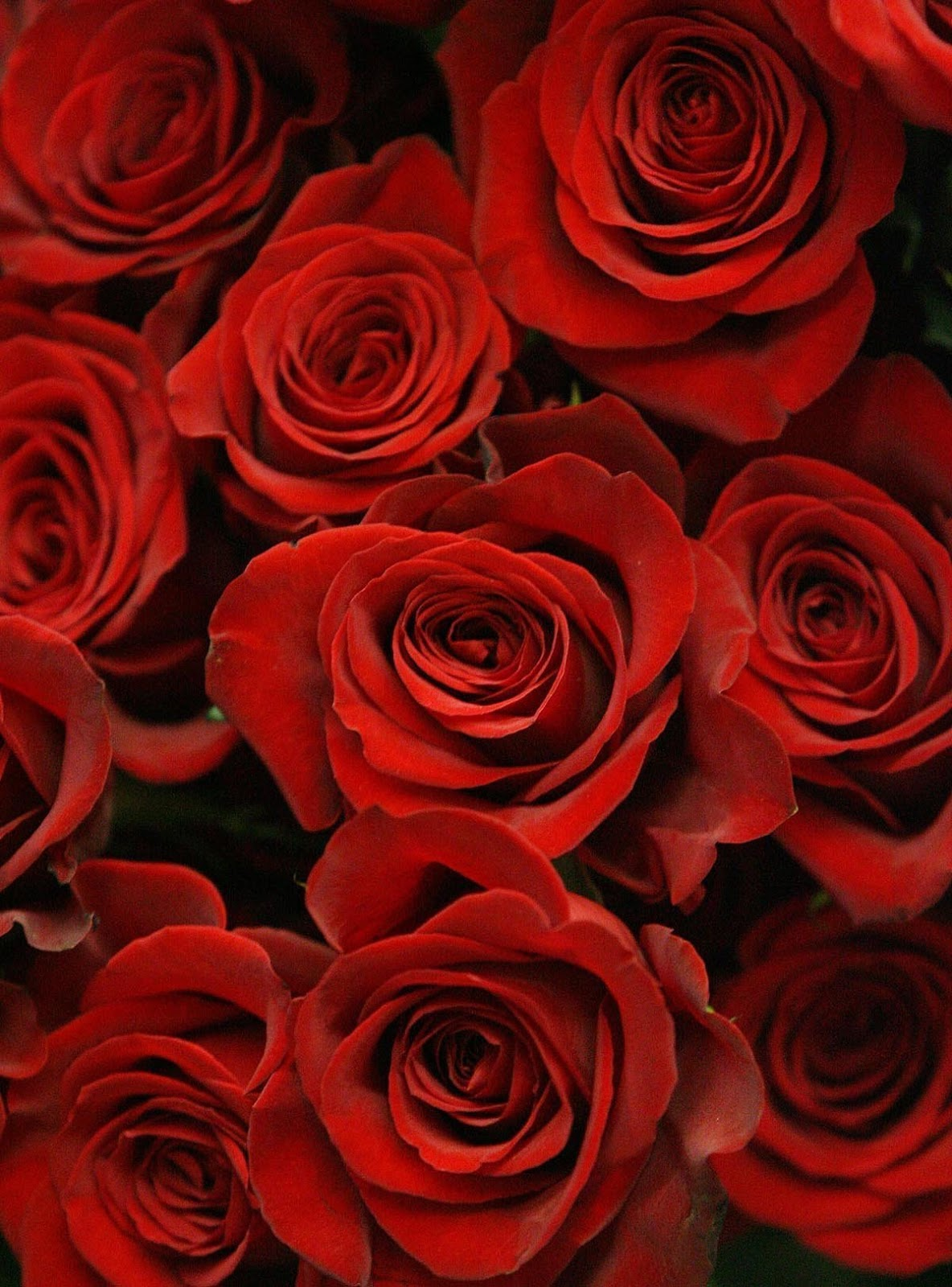 love in here: valentines day flowers hd wallpapers 1080px hq pictures