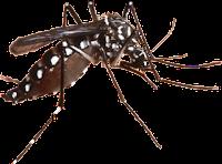 gambar nyamuk