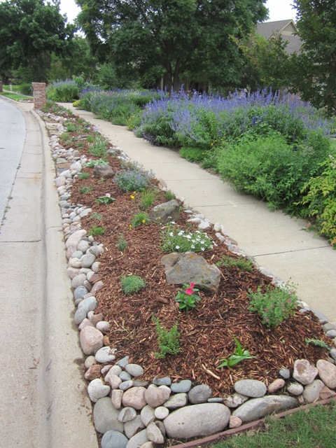 You Can See The Taller Plantings In The Bed On The Other Side Of The  Sidewalk. All Of The Plants I Chose For The Hellstrip Plantings Are Lower  Growing.