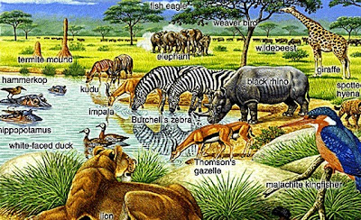 Pengertian Ekosistem Dan Jenis Bioma Disini Com