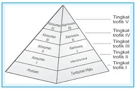 Piramida ekologi adalah