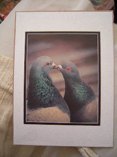 Photo of Pigeons Kissing