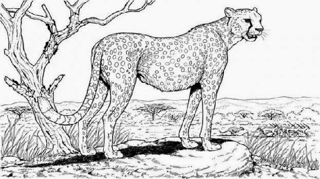 advanced nature coloring pages - photo#34
