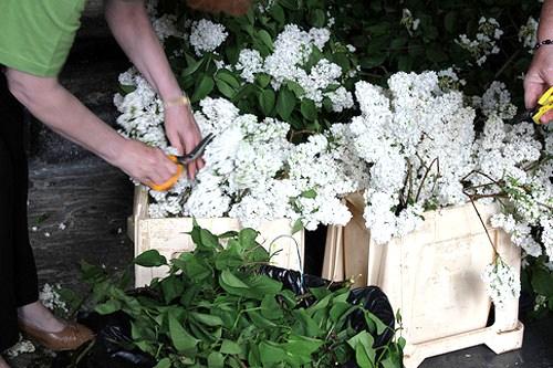 Il giardino sfumato alberi in chiesa per nozze regali - Il giardino della sposa ...