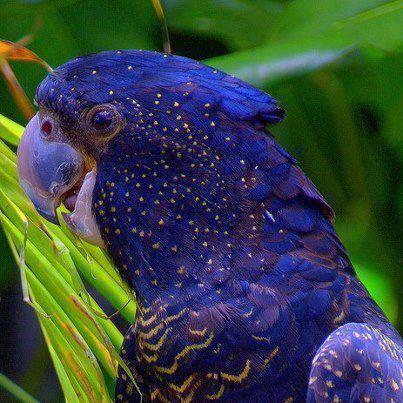 اروع مايمكن ان تشاهده من صور الطيور  طيور8