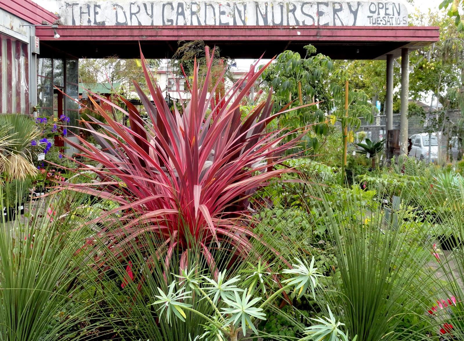 Danger Garden The Dry Garden Who Needs Polish When You