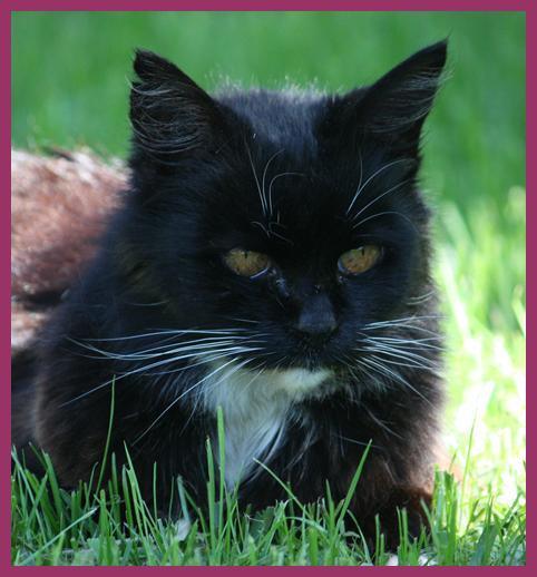 Kendalls Cat