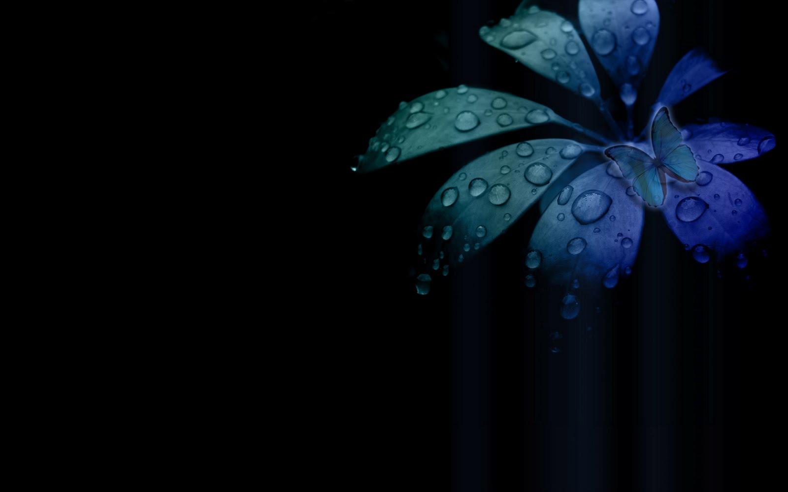 Black Blue Butterfly Desktop