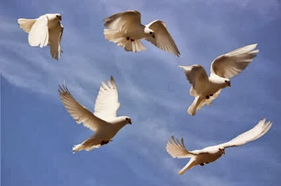 White doves seen after a loved ones death