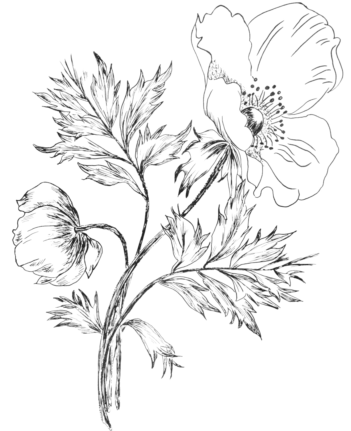 Line Art Flowers Design : Digital two for tuesday day flower designs