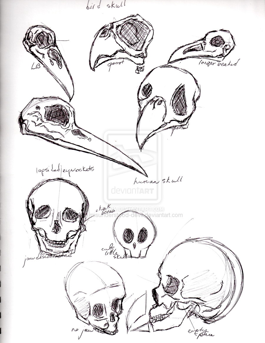 Displaying 16> Images For - Crow Body Anatomy...