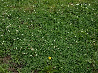 Flowers at Hibiya Garden - Tokyo, Japan