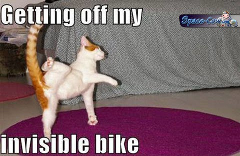 funny cat bike picture