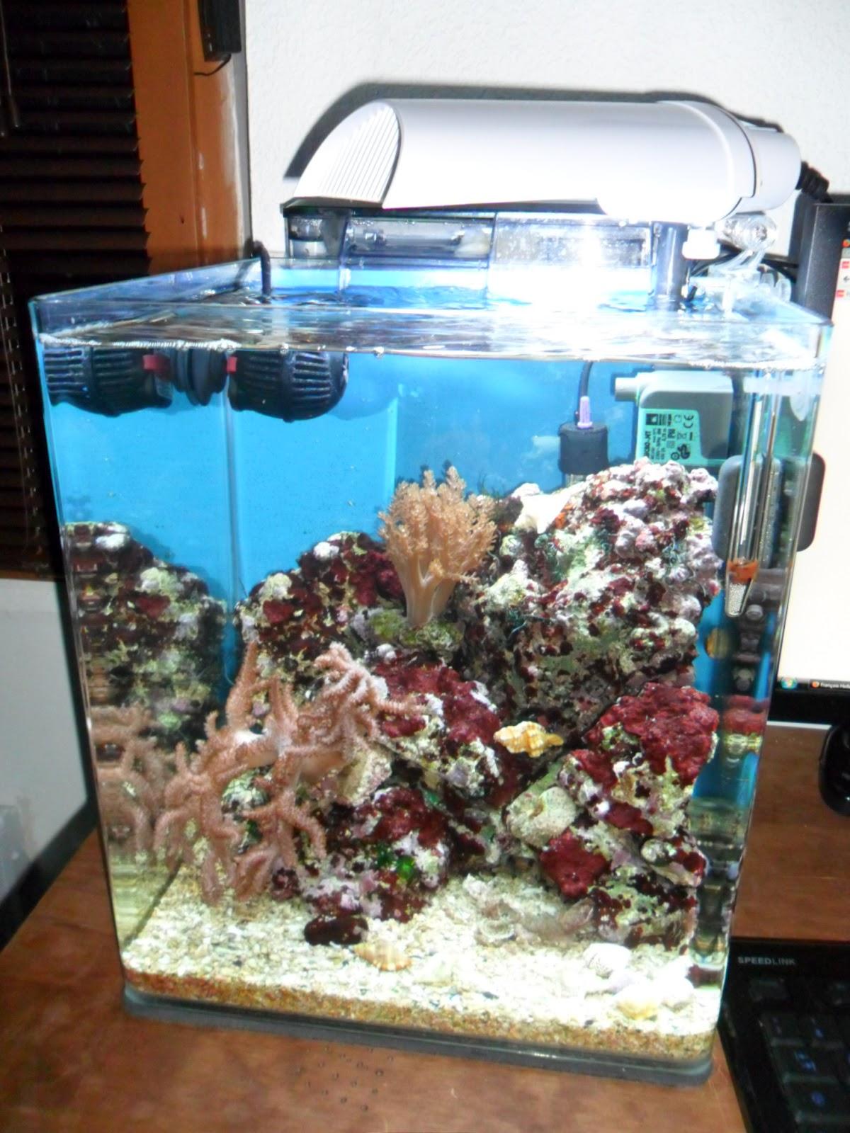 SAM_0326 Frais De Aquarium Recifal Complet Concept
