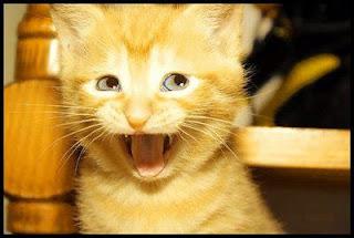 funny cat face olala
