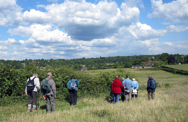 Looking at a hedgerow near Well Wood. The village of Nash is visible to the far left. 11 June 2011.