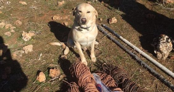 Bomb-sniffing dog saves lives after it found buried 100 kg of explosives [ Photos ]