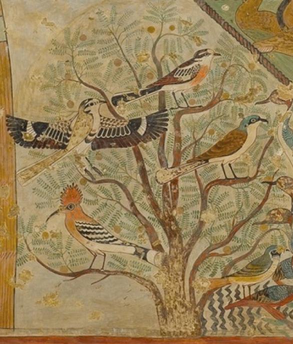 Onscience tree of life for Beni hasan mural