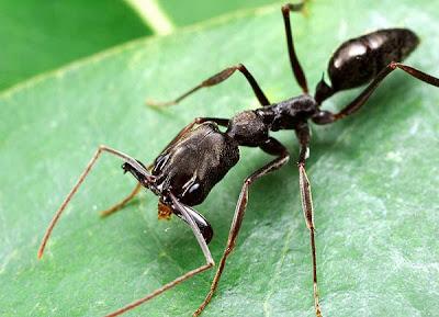 Sonhos com Formiga