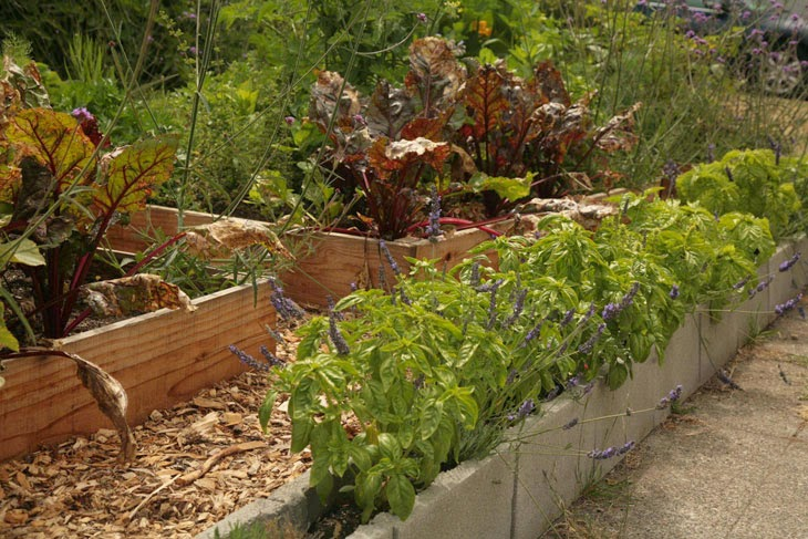 Cinder blocks are perfect for growing herbs. - He Started With Some Boxes, 60 Days Later, The Neighbors Could Not Believe What He Built