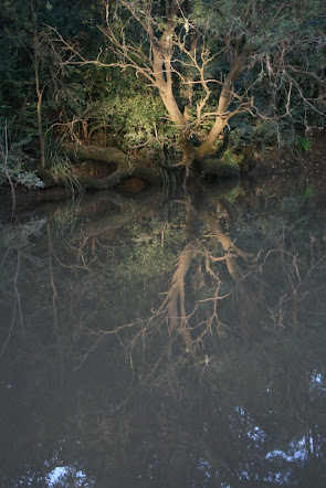 Tree reflected in creek