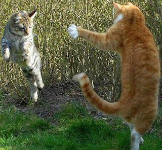 kucing gaduh balik kampung raya