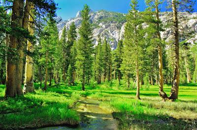 Paisaje de pinos en la montaña - Landscape