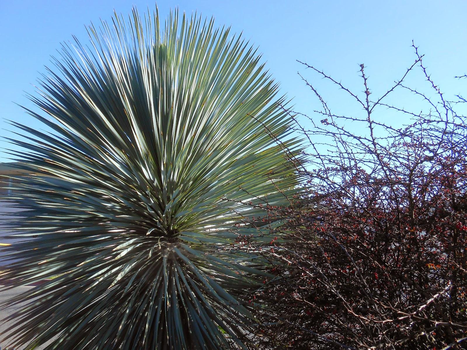 spiritual process, spiritual healing, plant photo