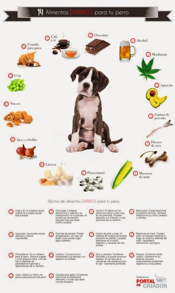 14 alimentos prohibidos para tu perro
