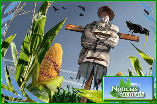 [Imagem: Holanda-diz-N%25C3%2583O-%25C3%25A0-Monsanto.jpg]