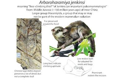 Jurasic mammals