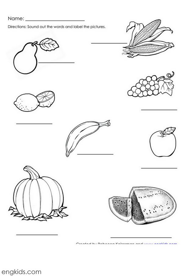 pumpkin plant label the pumpkin vine diagram using the