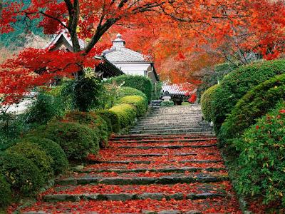 Japan Gardens Photos