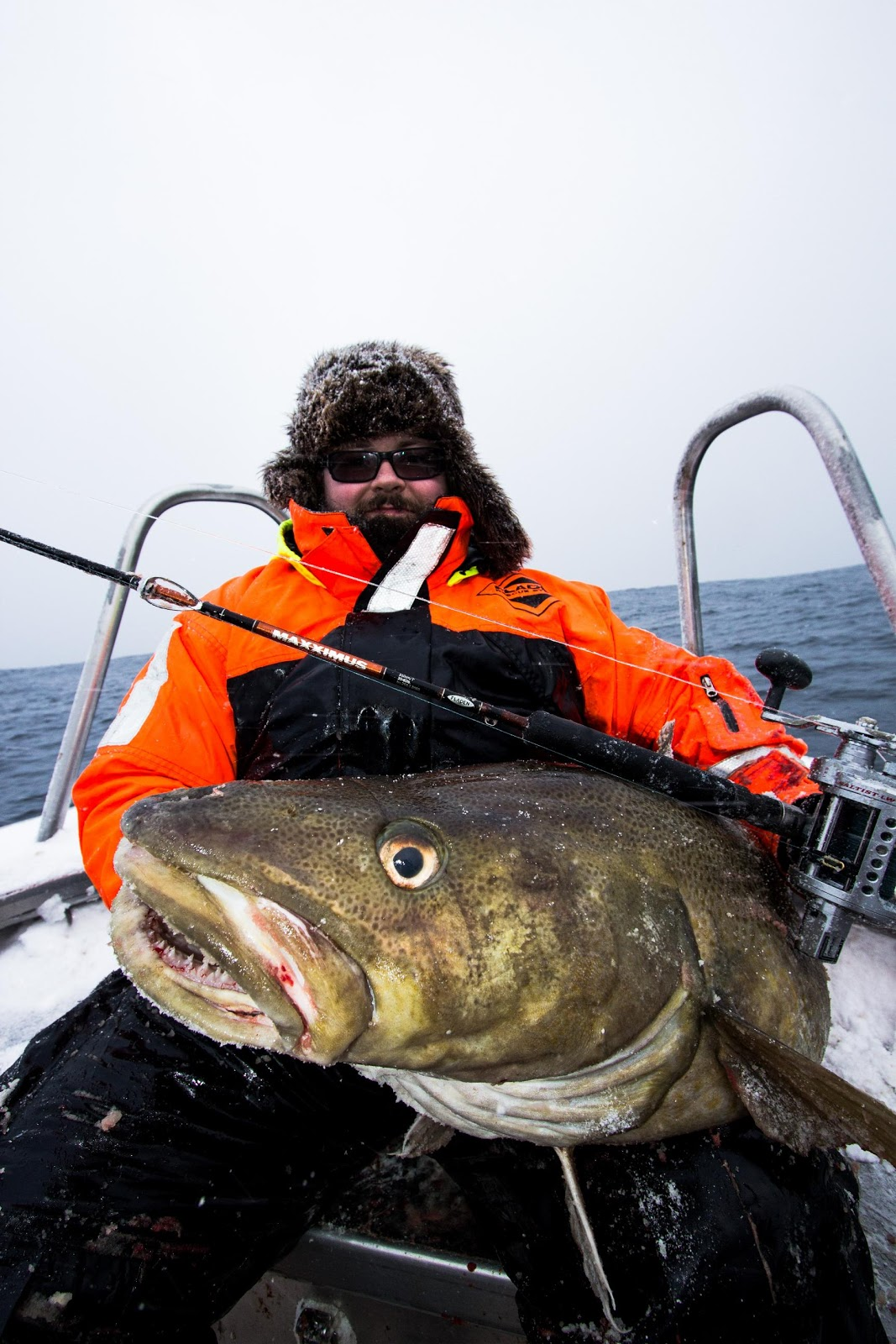 Big fishes of the world cod atlantic page 2 for Largest saltwater fish