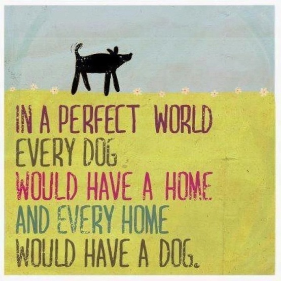 Forever Home Dog Rescue Iowa