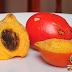 Pijuayo - Fruta de palmera en la selva del Perú