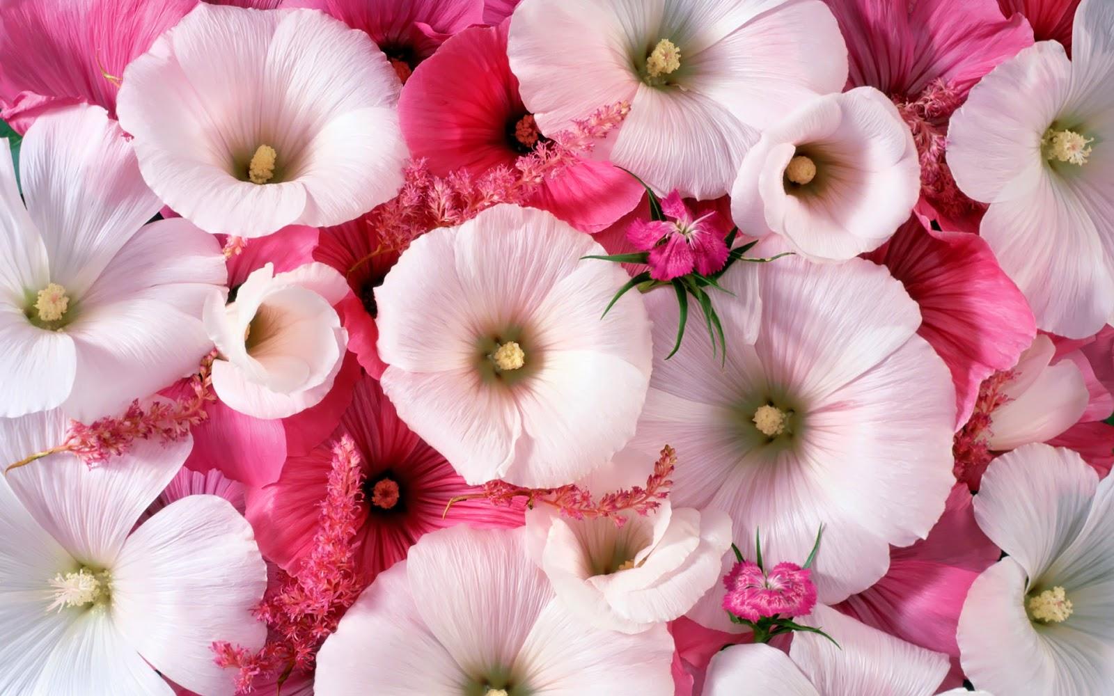 White pink red flowers desktop wallpapers desktop wallpaper white pink red flowers wallpaper mightylinksfo