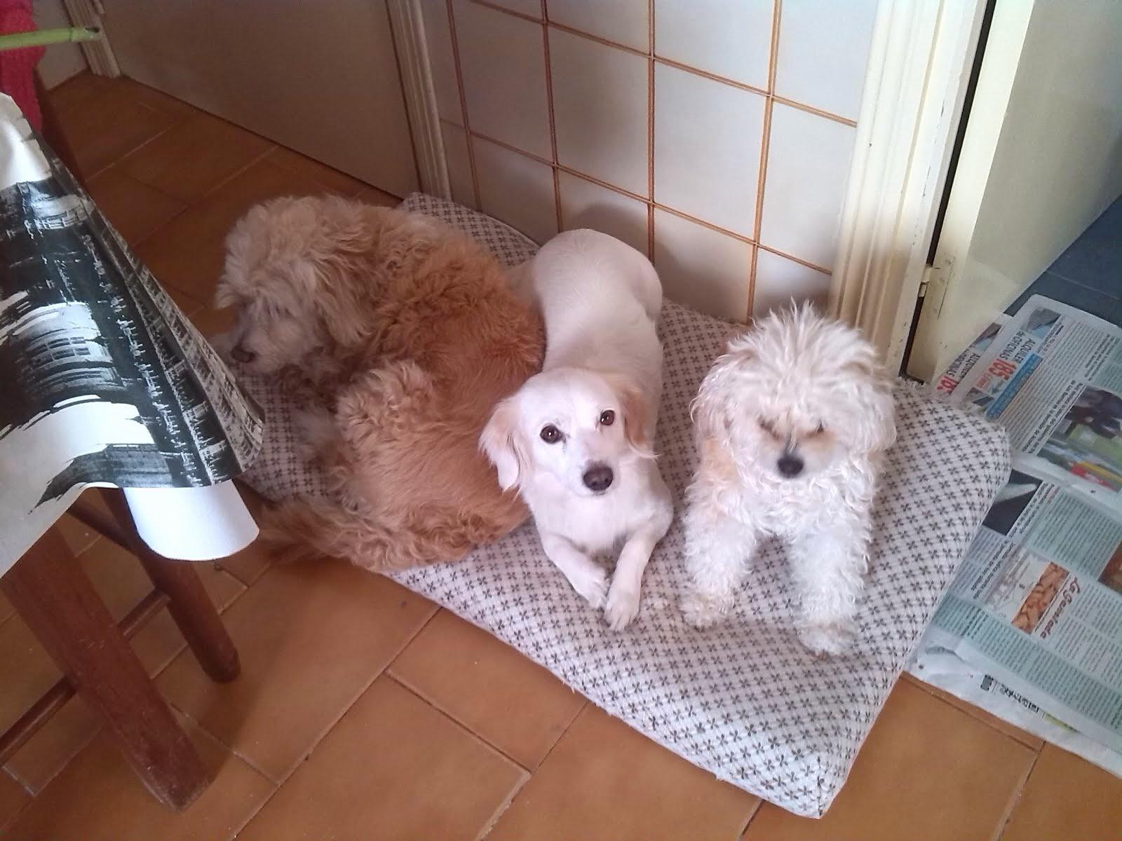 Las tres niñas juntas.