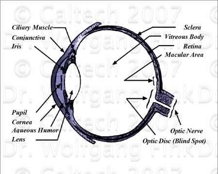 mata, keajaiban mata, mata bekerja, cara mata bekerja, cara mata, struktur mata