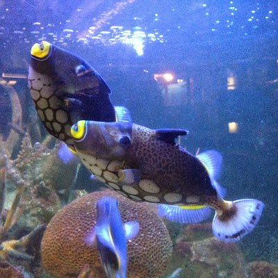 Detroit Belle Isle Aquarium colorful fish