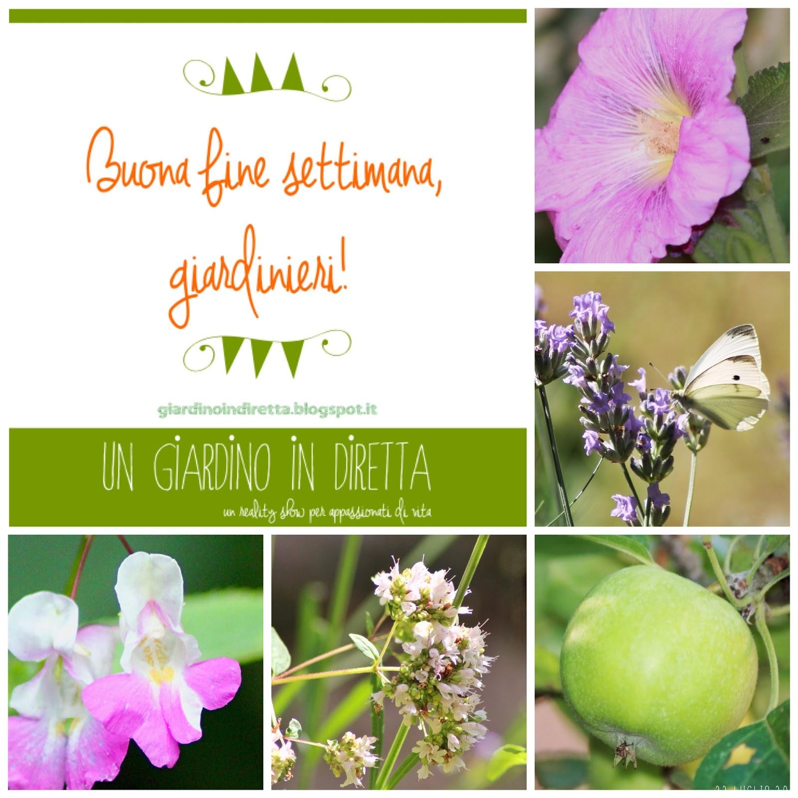 I fiori della settimana in diretta dal giardino un for I fiori della balsamina