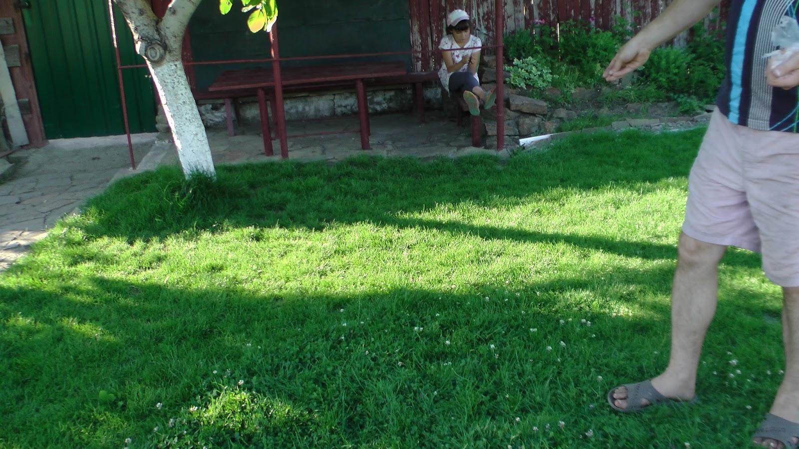 Клеверный газон: выбор сорта, когда сеять 18