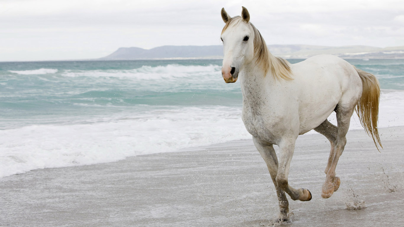 White running horses - photo#15