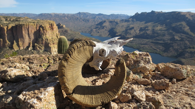 Arizona+Desert+Bighorn+Sheep+Hunting+in+Unit+22+with+Colburn+and+Scott+Outfitters+8.JPG